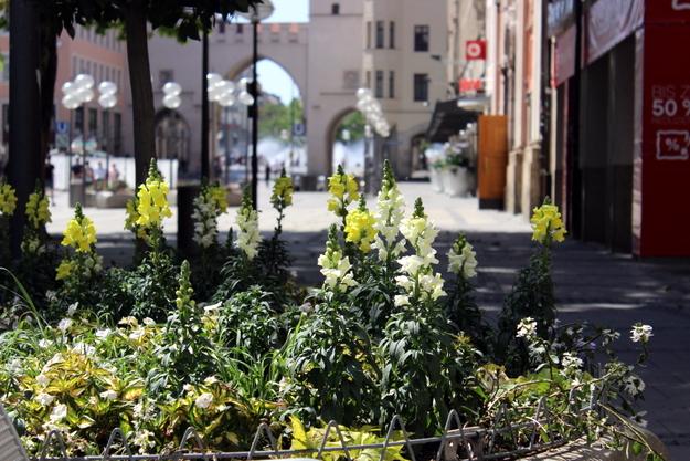 Pflanzen in der Nähe zum Stachus